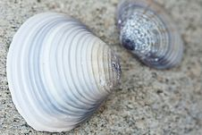 Free Tow Cockleshells Stock Photo - 13689580