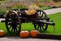 Free Pumpkins Royalty Free Stock Image - 13691146