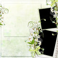 Free Green Spring Frame With Cherry Flowers Royalty Free Stock Image - 13698616