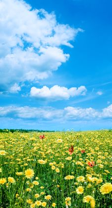 Free Yellow Field. Stock Photography - 13690042