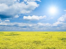 Free Yellow Field. Stock Photo - 13690050
