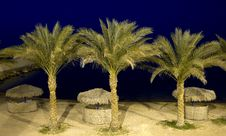 Free Tropical Beach At Night Royalty Free Stock Images - 13690269
