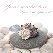 Free Cockle-shell With Pebble Stock Photography - 13690312