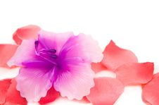 Free Candle - Flower With Artificial Rose Petals Royalty Free Stock Photos - 13690328