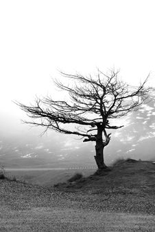 Free Lonesome Tree Royalty Free Stock Photos - 13690508