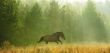 Free Run Stock Image - 13691291
