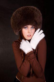 Free The Siberian Beauty Stock Photo - 13691450