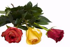 Free Three Roses Stock Photography - 13691552