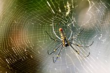 Free Spider Stock Photo - 13692100