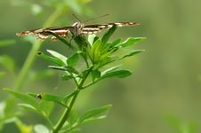 Free Butterfly On Leaves Royalty Free Stock Image - 13692306