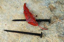 Free Autumn Leaf And Old Nails Stock Photography - 13692622