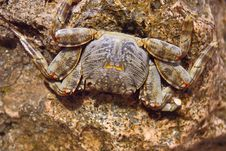 Free Crab Stock Images - 13692884