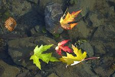 Leafs On Water Royalty Free Stock Images