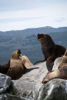 Free Tierra Del Fuego Royalty Free Stock Image - 13695586