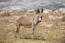 Free Donkey Stock Images - 13695754