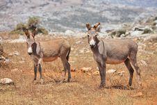 Free Donkey Royalty Free Stock Images - 13695769