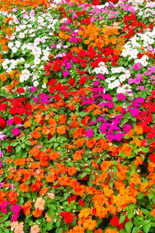 Free Flower-Garden Bed Stock Image - 13695801