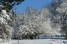 Snow Covered Tree In The Park Stock Photos