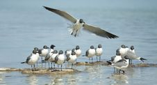 Free Sea Gulls By The Water Royalty Free Stock Images - 13698059