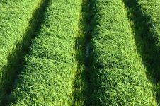 Free Green Grass Field Stock Photography - 13698402