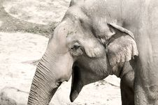 Free Elephant Royalty Free Stock Image - 13698806