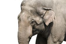 Free Elephant Royalty Free Stock Photography - 13698877