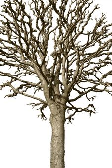 Free Bare Tree Stock Photography - 13698902