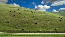 Free Cows Hillside Royalty Free Stock Photography - 13698907