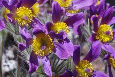 Free Spring Flowers Stock Photos - 13698973
