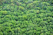 Free Foliage Texture Royalty Free Stock Photo - 13699835