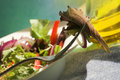 Free Fresh Garden Salad Royalty Free Stock Photo - 1370255