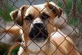 Free Prisoner Royalty Free Stock Photos - 1376818