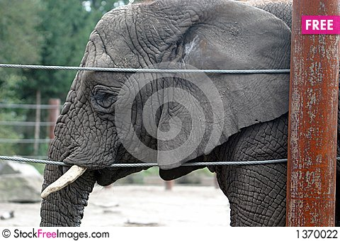 An old and tired african elephant Stock Photo