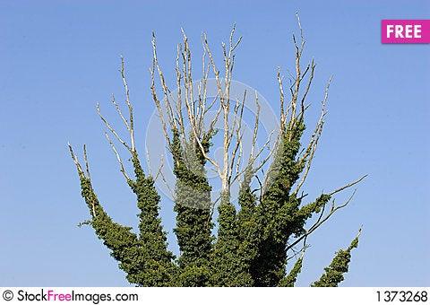 Free Dead Tree Royalty Free Stock Photos - 1373268