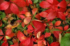 Free Autumn Leaves Royalty Free Stock Photo - 1375075