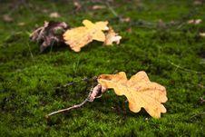 Free Autumn Royalty Free Stock Image - 1375076
