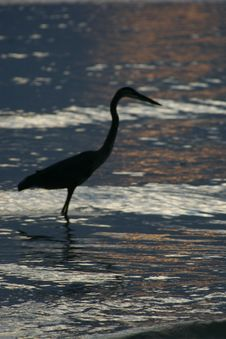 Free Heron S Shadow Royalty Free Stock Photos - 1376128
