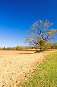 Free Autumn Tree Against The Blue Sky Stock Images - 1376344