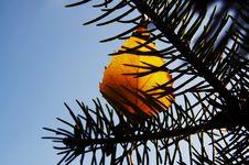 Free Autumn Theme Royalty Free Stock Image - 1376896