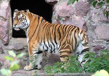 Free Moscow Zoo 31 Stock Photos - 1377713