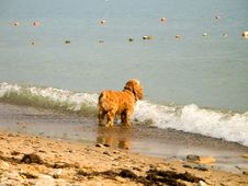 A Dog At The Sea Stock Photos