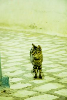Free Alone Street Cat By Night Stock Photos - 1377953