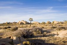 Free Summer In Joshua Tree,Ca Royalty Free Stock Images - 1379359