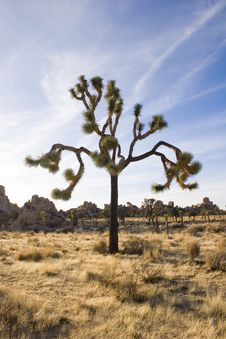 Free Summer In Joshua Tree,Ca Stock Photos - 1379373