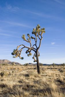 Free Summer In Joshua Tree,Ca Stock Images - 1379394