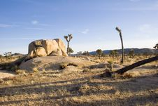 Free Summer In Joshua Tree,Ca Stock Image - 1379401