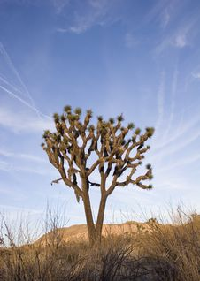 Free Summer In Joshua Tree,Ca Royalty Free Stock Images - 1379409