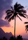 Free Tropical Sunset Royalty Free Stock Images - 13705179