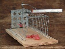 Free Mousetrap Live Traps, Stock Image - 13701711