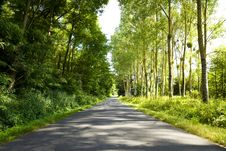Free Roadway Trough A Crowded Forest Stock Images - 13703084